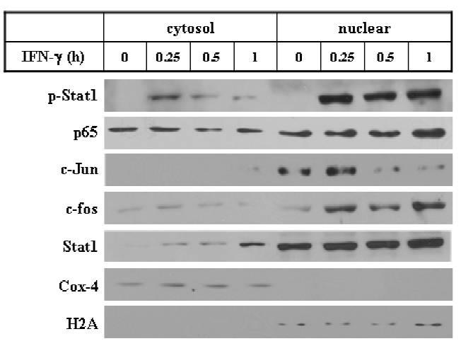 p65 antibody western blot EMD Millipore