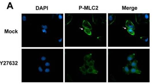 免疫细胞化学