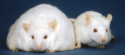 Laboratory Mice and Rats figure 4