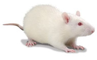 Laboratory Mice and Rats figure 5