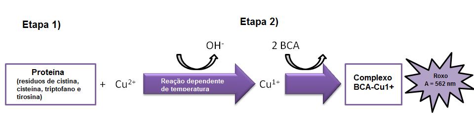 Количественный анализ белка Рисунок 1