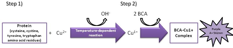 Protein Quantitation figure 1