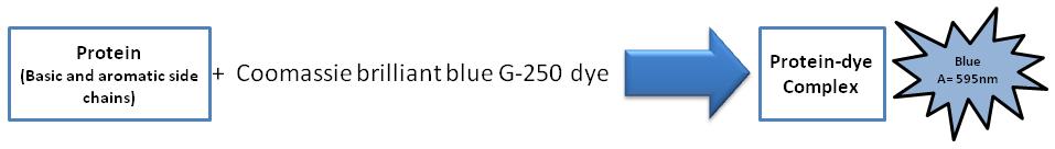 Protein Quantitation figure 2