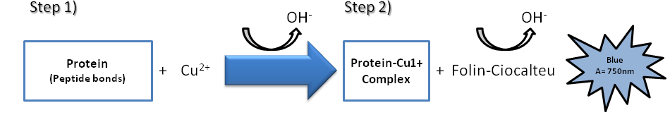 Protein Quantitation figure 3