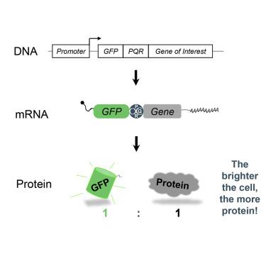 Protein Quantitation