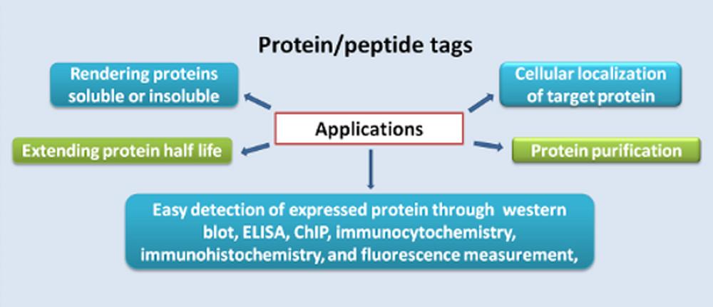 蛋白/肽标签 图 2