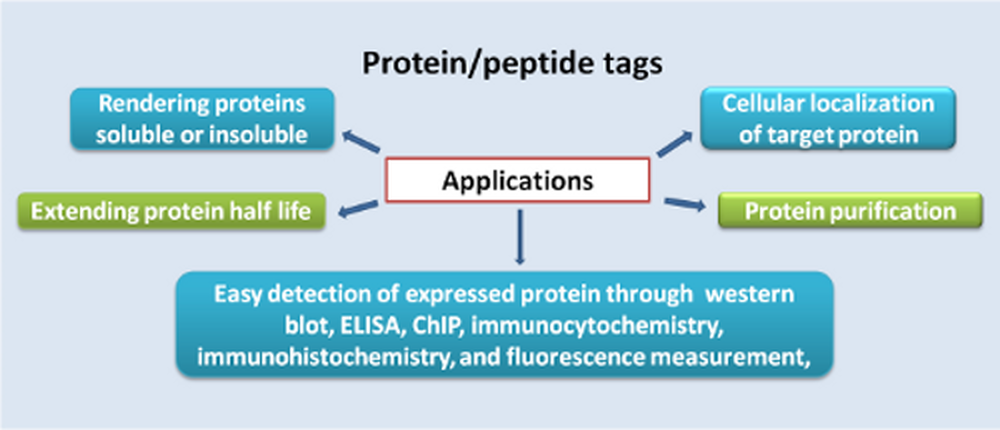 Protein/Peptide Tags