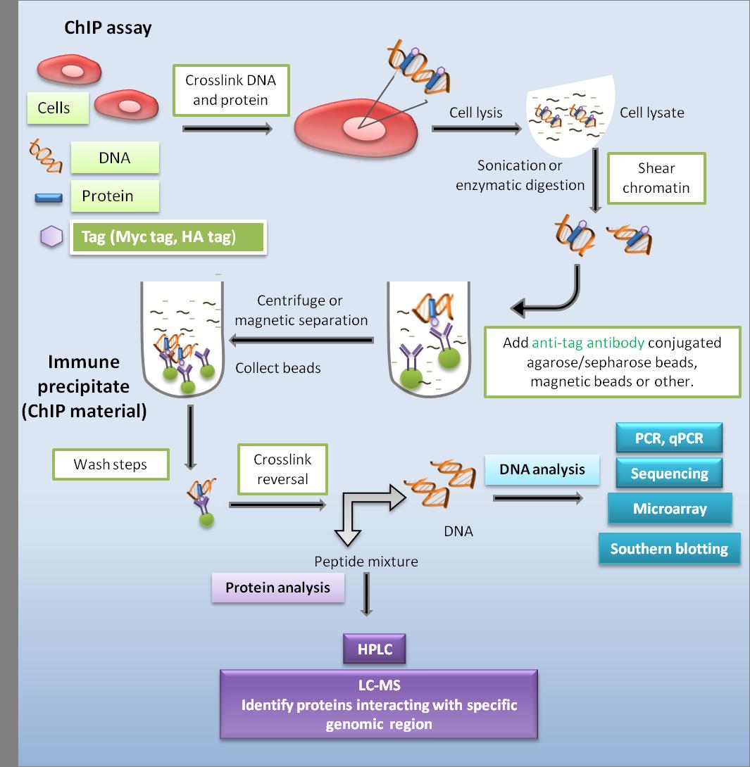 蛋白/肽标签 图 3