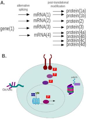 蛋白质修饰的研究方法 图 1