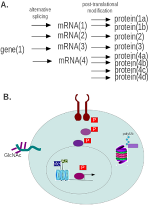 Protein Modification Research Methods Рисунок 1