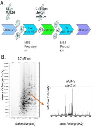 蛋白质修饰的研究方法 图 2