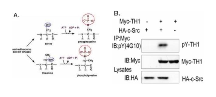 Protein Modification Research Methods Рисунок 3