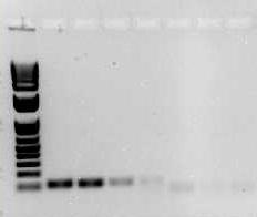 PCR方法 图 2