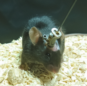 Behavioral Phenotyping in Rats and Mice