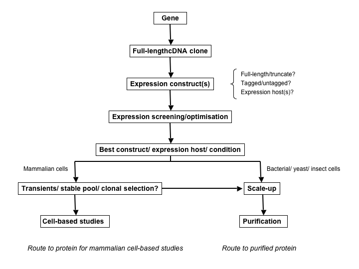 Экспрессия рекомбинантных белков: системы вектор-носитель Figure 1