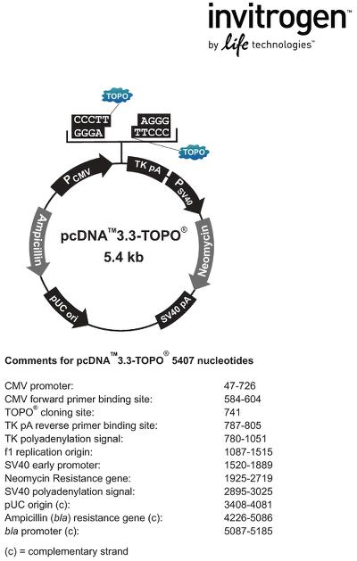 Экспрессия рекомбинантных белков: системы вектор-носитель Figure 3