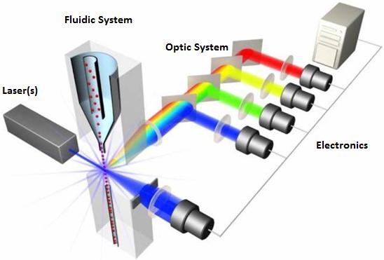 流式细胞术-纵览与基础   图 1