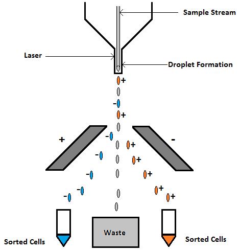 流式细胞术-纵览与基础   图 13