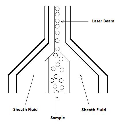 流式细胞术-纵览与基础   图 2