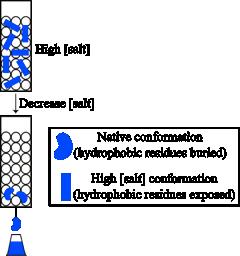 Purificación de proteínas  Figura 7