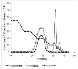 Purificación de proteínas  Figura 8