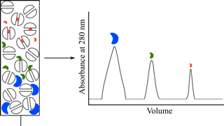 Purificación de proteínas  Figura 9
