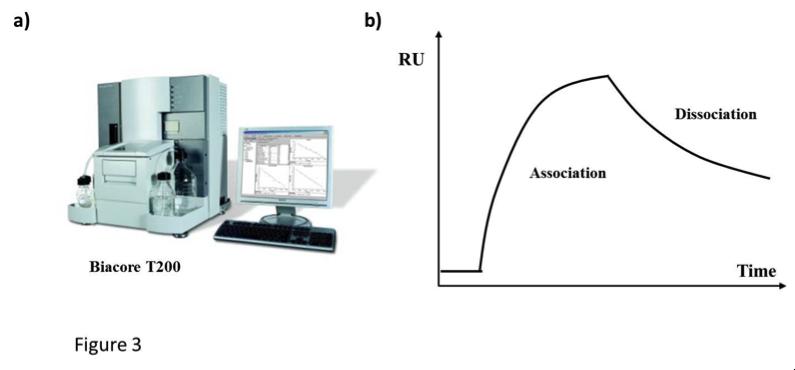 表达和纯化单克隆抗体:在一个基础研究实验室我们能做什么 图 3
