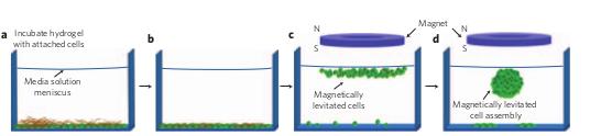 三维细胞培养:综述 图 2