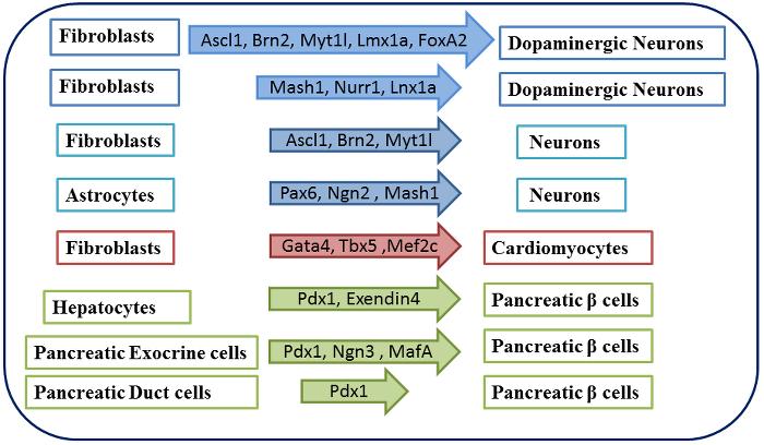 干细胞 图 5