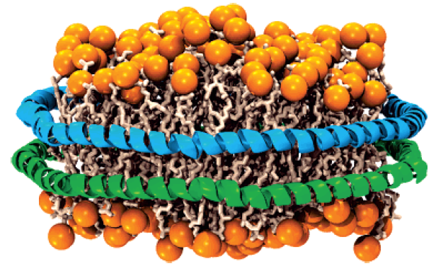 Nanodiscs: Membrane Protein Research in Near-Native Conditions figure 1