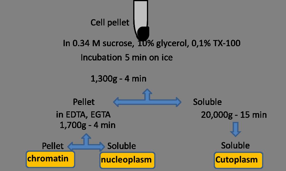 细胞器标记物和亚细胞分离 图 3