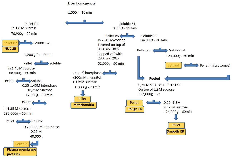 细胞器标记物和亚细胞分离 图 4
