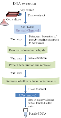 DNA Extraction and Purification