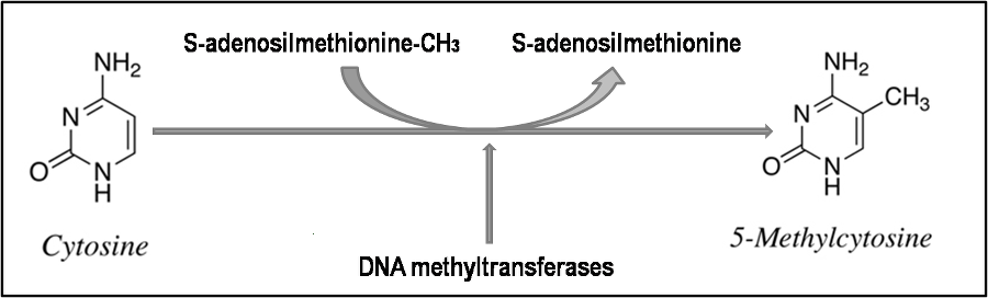 DNA 甲基化研究方法 图 1