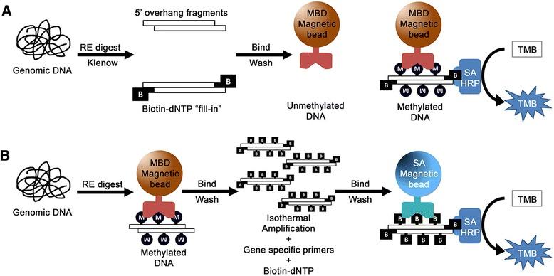 DNA 甲基化研究方法 图 4