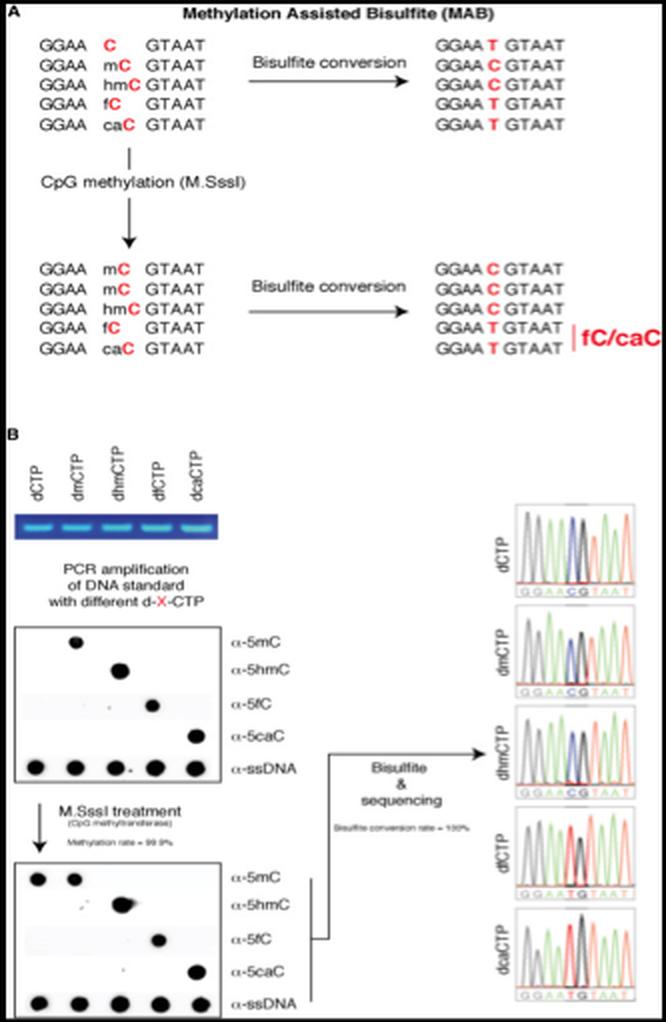 DNA 甲基化研究方法 图 5