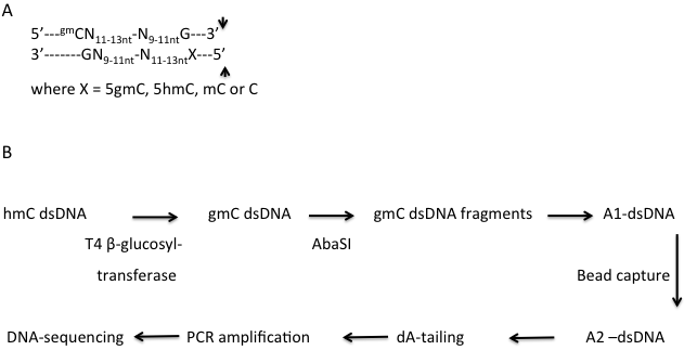 DNA 甲基化研究方法 图 6