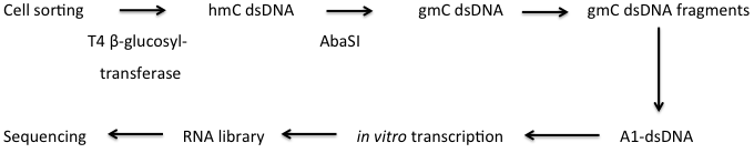 DNA 甲基化研究方法 图 7