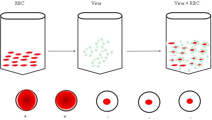 Virus Identification and Quantification