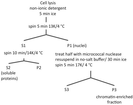 染色质及其表观修饰的免疫学分析 图 1