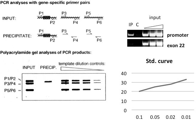 染色质及其表观修饰的免疫学分析 图 3