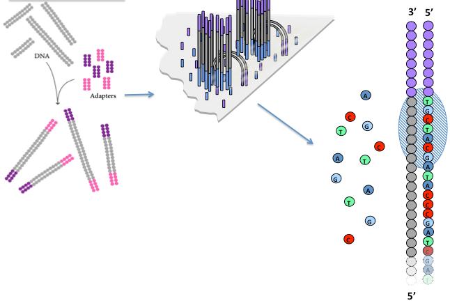 染色质及其表观修饰的免疫学分析 图 4