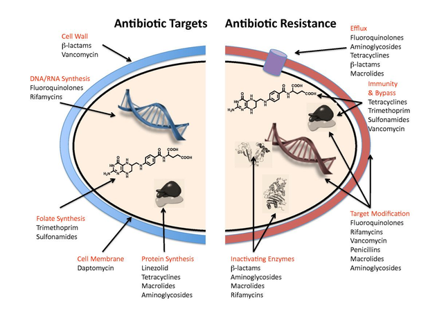 Antibiotic Discovery