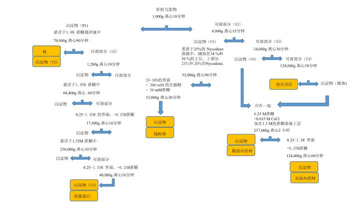亚细胞分级分离 图 2