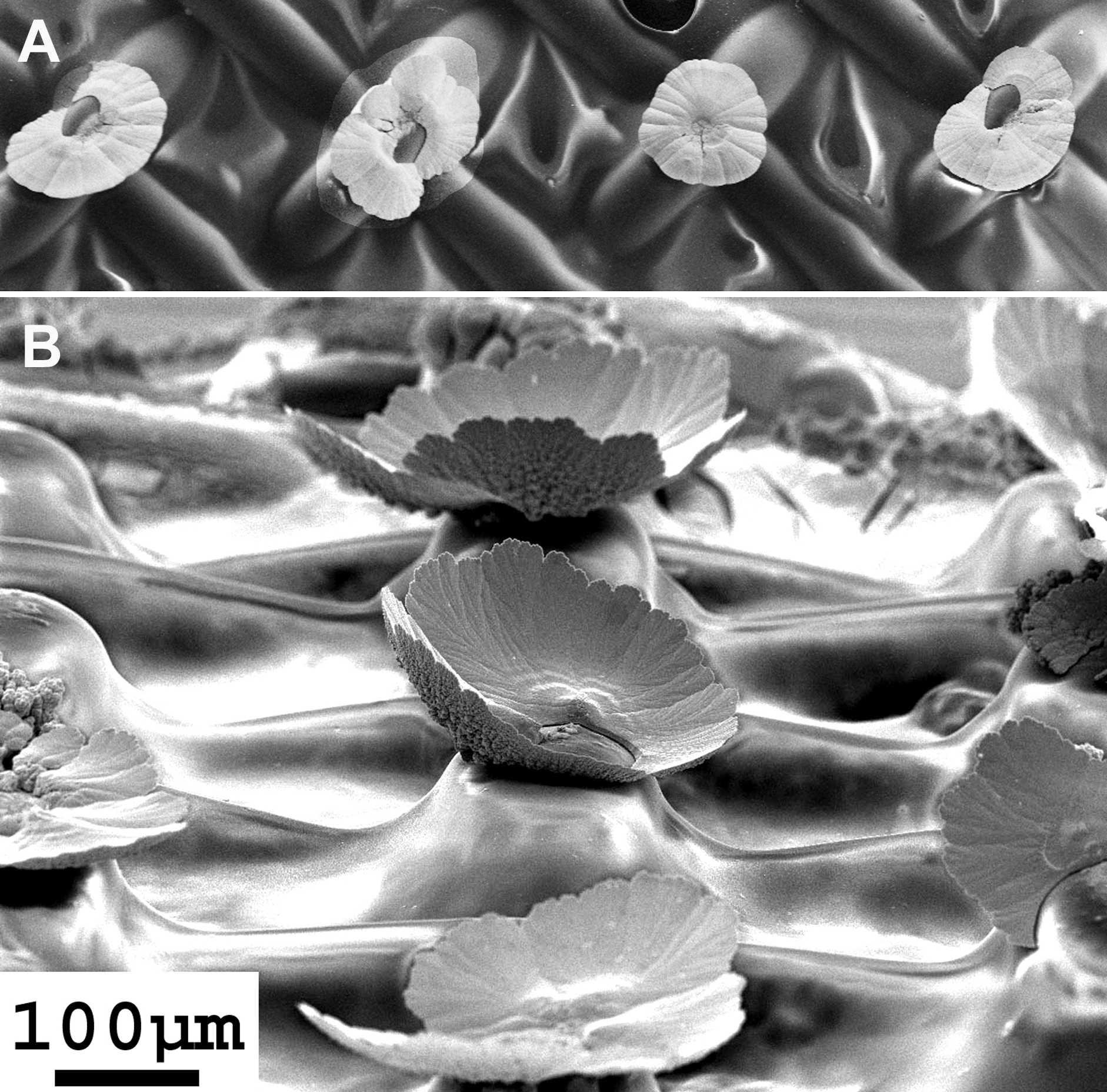 3D-mesostructures obtained by self-organization of metallic  nanowires  figure 1