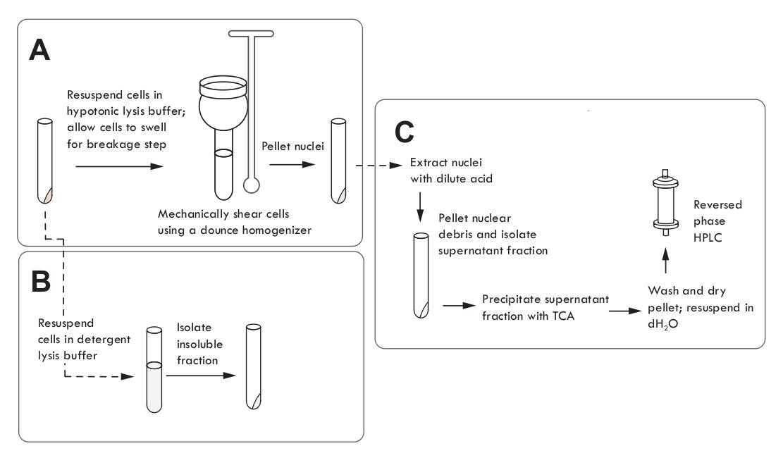 组蛋白修饰的研究方法 图 1