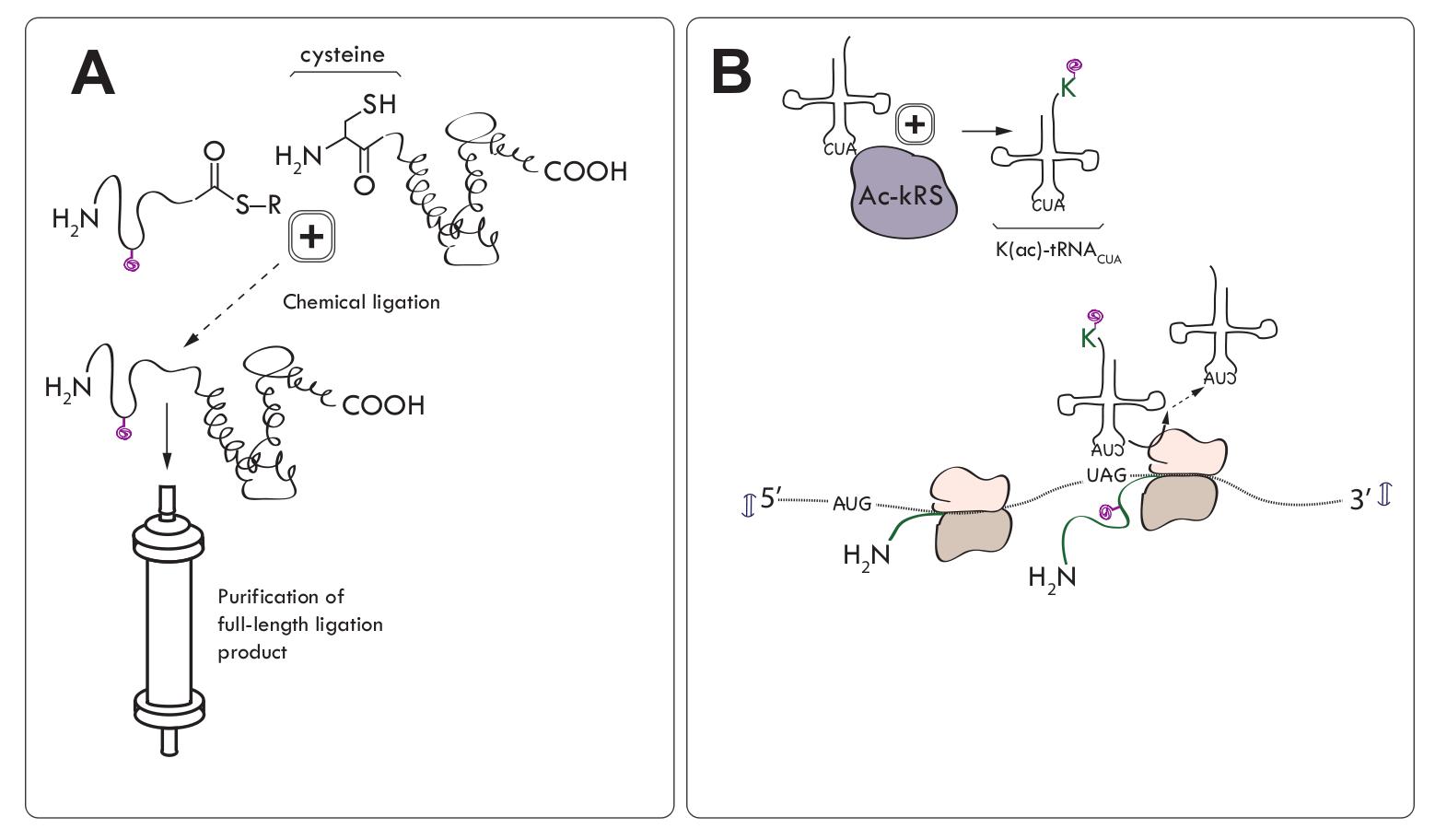 组蛋白修饰的研究方法 图 2