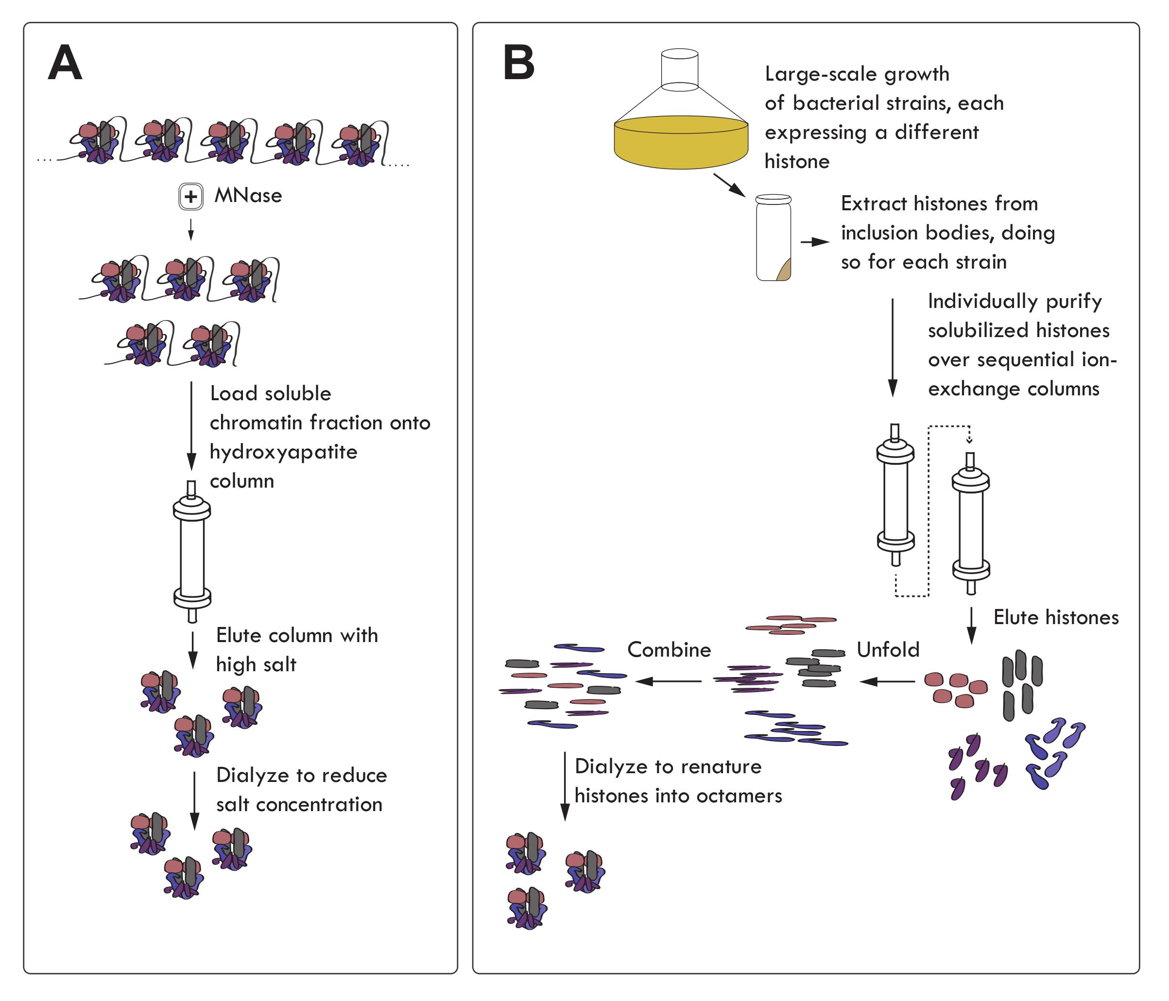 组蛋白修饰的研究方法 图 3