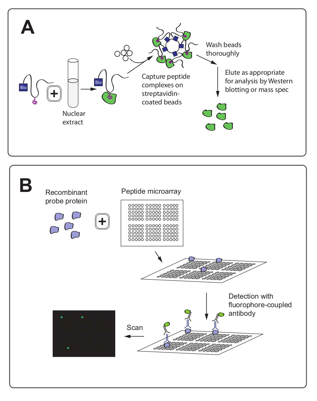 组蛋白修饰的研究方法 图 4