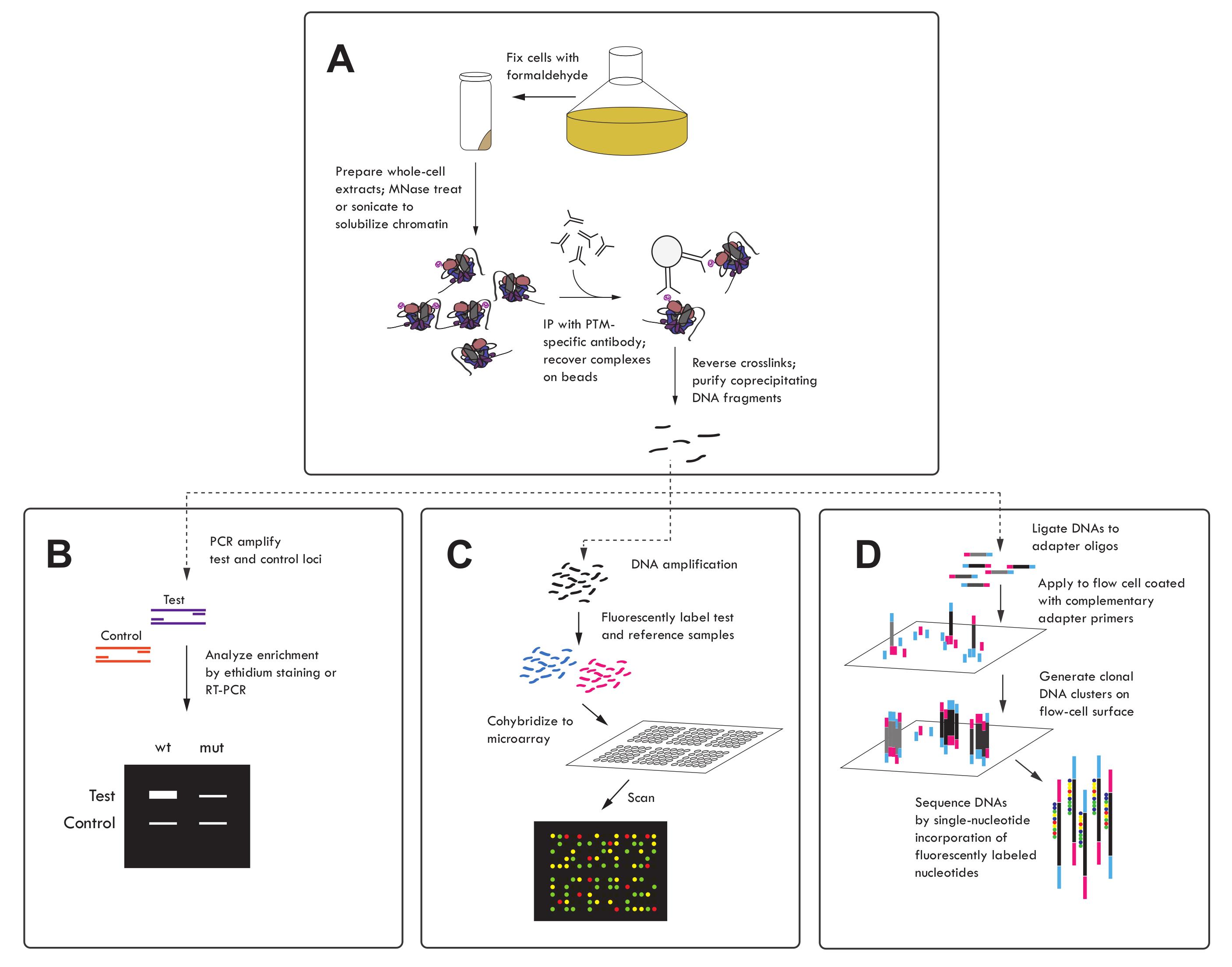 组蛋白修饰的研究方法 图 5